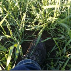 """Bondesnack """"ut i fält"""" Greppa växtskyddet och säkra skörden"""