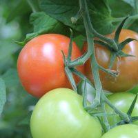 ÖSP söker en vikarierande trädgårdsombudsman