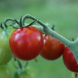 Greppa framtiden, växthusbranschen