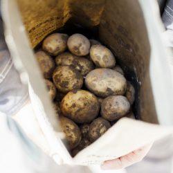 Potatis är klimatsmart